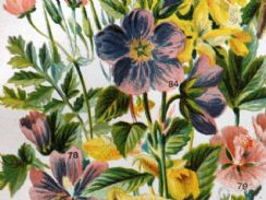 28th September 2019. Gordon Botanical Prints